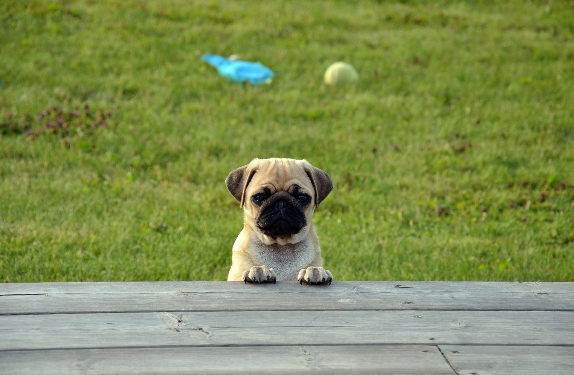 O-ZEN Portfolio Training Mensch und Hund - Hund aleine
