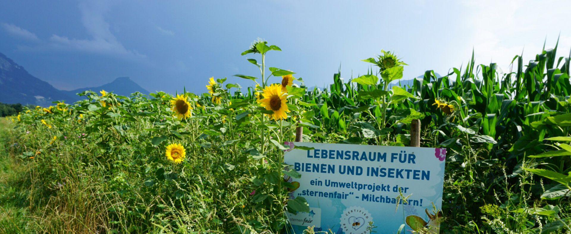 O-ZEN Portfolio Milchcafe Radermacher Feld mit Sonnenblumen und Schield Umweltprojekt Sternenfair