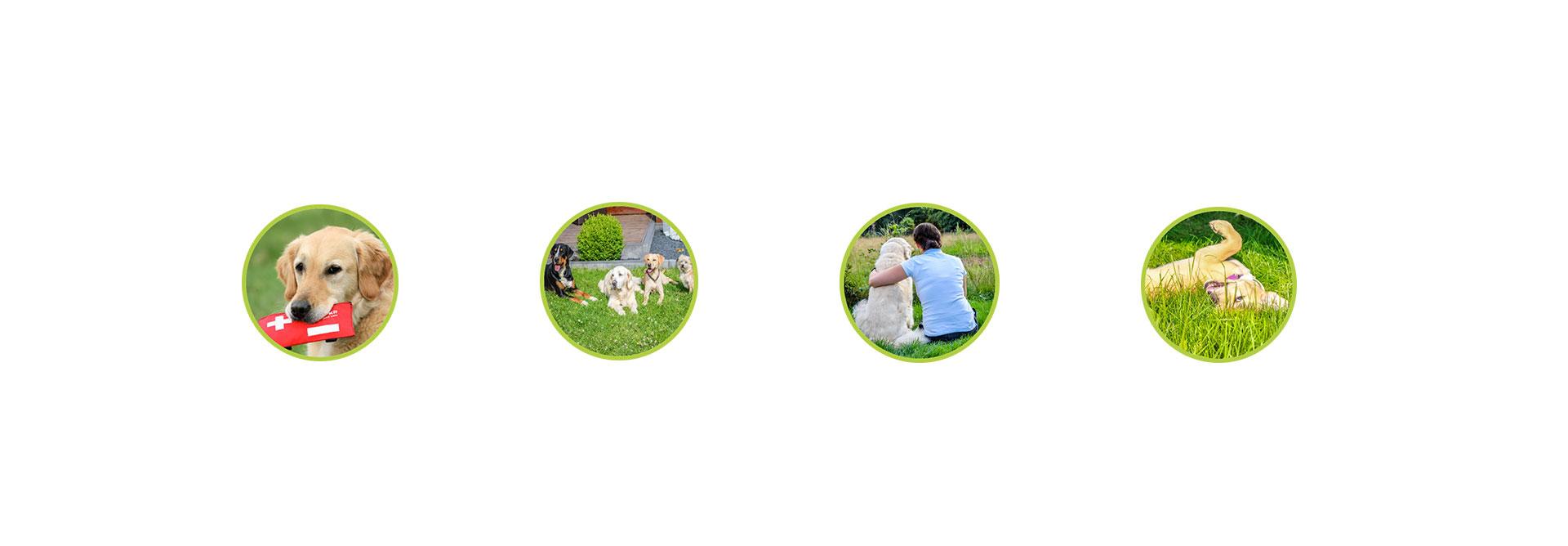 O-ZEN Portfolio Training Mensch und Hund Leistungen