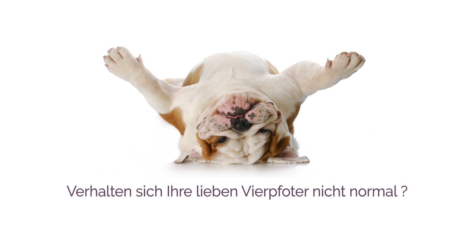 O-ZEN Portfolio, Beispiel gestaltung Internetseite Verhalten von Hunde - hund liegt auf dem Rücken